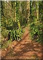 SX8863 : Path into Ten Acre Brake by Derek Harper