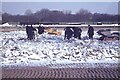 ST5368 : Barrow Gurney Water Filtration Works - Removing ice from filterbeds by Richard Park