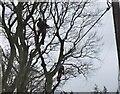 NT2538 : Trimming tree branches, Haystoun by Jim Barton