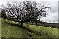 SJ9163 : Staffs Way / Gritstone Trail interesting tree by Brian Deegan