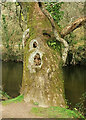 SX8063 : Tree by the Dart by Derek Harper