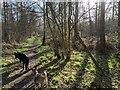 TF0820 : Dogs and sunlight by Bob Harvey