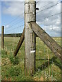 ST5548 : Recycled post office pole? by Neil Owen