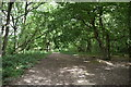 TQ4357 : Byway, Withins Wood by N Chadwick