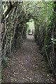 TQ4357 : Wooded footpath by N Chadwick