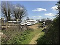 TL5580 : Ely Rowing Club - The poor relations! by Richard Humphrey