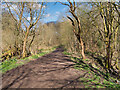 SD8003 : Track through Prestwich Clough by David Dixon