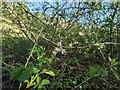 TF0820 : Tiny blossoms by Bob Harvey