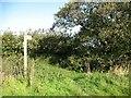 SD2781 : The Cumbria Way near Netherhouses by Adrian Taylor