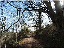 ST1282 : Track through Garth Wood by Gareth James