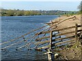 SK6442 : River Trent at Stoke Bardolph by Alan Murray-Rust
