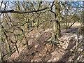 SD7915 : Woodland on the Edge by David Dixon