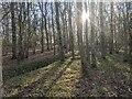 TF0820 : Light and shadow by Bob Harvey