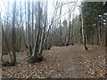 TQ7839 : Coppicing in Saunders' Wood by Marathon