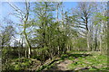 TF0626 : The south-west corner of Callan's Lane Wood by Tim Heaton
