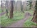 NT3264 : Bike paths, Lady Lothian's Plantation by Richard Webb