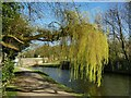 SE1937 : Weeping willow by the Leeds and Liverpool Canal by Stephen Craven