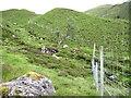 NG7808 : Meandering deer fence by Chris Wimbush
