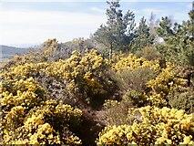 NS7791 : Summit area, Gillies Hill by Richard Webb
