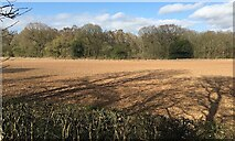 SP2874 : HS2 enabling works, Crackley-Burton Green, March 2021 (3) by Robin Stott