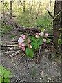 TF0820 : Emerging Blossom by Bob Harvey