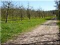 SO6750 : Orchard near Paunton Court by Philip Halling