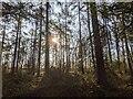 TF0820 : Spring sunshine by Bob Harvey