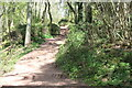 SO3216 : Steps up through woodland on Beacons Way by M J Roscoe