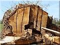 SO8831 : Felled oak tree by Philip Halling