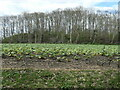 SE3423 : Field of rhubarb, Stanley by Christine Johnstone