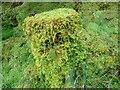 NN1777 : Moss-covered tree stump at Nevis Range by Eirian Evans