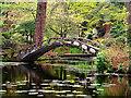 SJ7481 : Tatton Park Japanese Garden, The Almond Eye Bridge by David Dixon