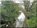 TM1179 : River Waveney downstream from Denmark Bridge by Adrian S Pye