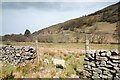 SD8999 : Sheep in Swaledale by Andy Waddington