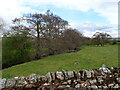 NY6528 : Grazing beside the Milburn Beck by JThomas