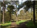 SK2680 : Path junction in Longshaw woodland by Graham Hogg
