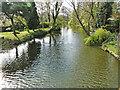 TM3389 : River Waveney downstream from Falcon Bridge by Adrian S Pye