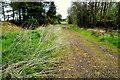 H3466 : Rough lane, Drumlish by Kenneth  Allen
