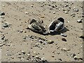 NT1877 : Let sleeping ducks lie? by M J Richardson