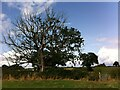 SP2886 : Blasted oak tree, Fillongley by Alan Paxton