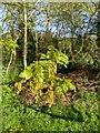 TF0820 : Oak Leaf, Oak Catkin by Bob Harvey