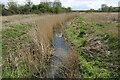 TQ6881 : Mucking Creek looking downstream by David Kemp