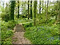 ST0519 : The Grove woodland garden at Holcombe Court, in  the parish of Holcombe Rogus by Marika Reinholds