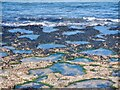 NT7177 : Limestone beach, Barns Ness by Richard Webb