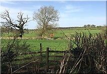 SP3073 : HS2 enabling works, Dalehouse Lane, Kenilworth (1) by Robin Stott