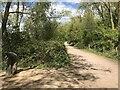 SP9368 : Footpath at Rushden Lakes nature reserve by Richard Humphrey