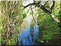 TM2659 : Upstream from Kettleburgh bridge by Adrian S Pye