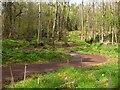NT5267 : Sinuous path in Speedy Wood by Jim Barton