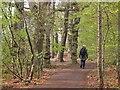 NT5268 : In Gifford Community Woodland by Jim Barton