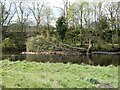NY8677 : Fallen tree in the River North Tyne by Oliver Dixon